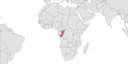 Envoi de SMS Congo