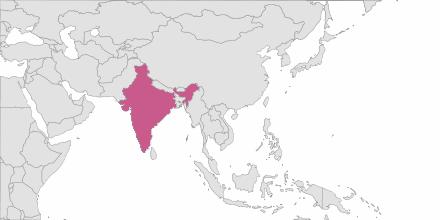 Envoi de SMS Inde