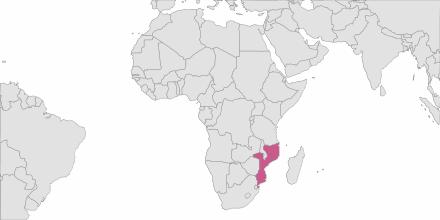 SMS sending Mozambique