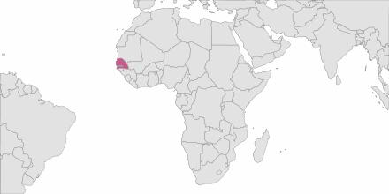 Envoi de SMS Sénégal